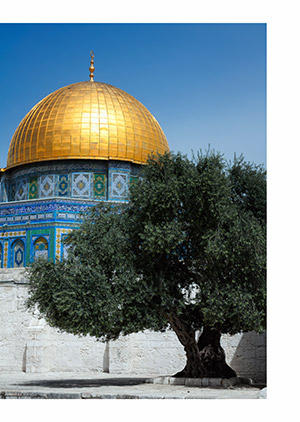 Olive tree and Dome of the Rock in Jerusalem